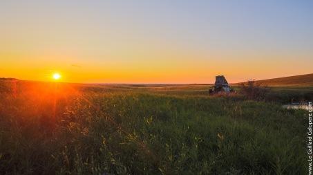 Enjoying sunset among the wheat