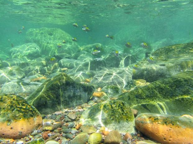 In the Cortez Sea, Baja California