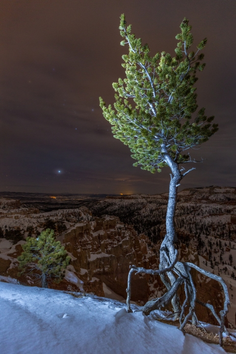 Even if the erosion is importante in Bryce Canyon National Park, the roots stay strong into the ground.