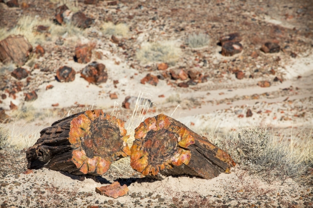 The Petrified Forest National Park, in Arizona, remembers us how luxuriant was this area millions years ago.