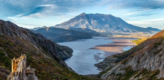 The Mount St Helens erupted in 1980, devastating all life around. The logs of ancient forest blown are on the lake.