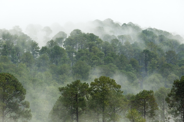 Mexican mists