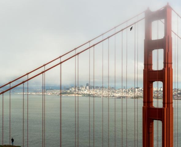Wild side of San Francisco