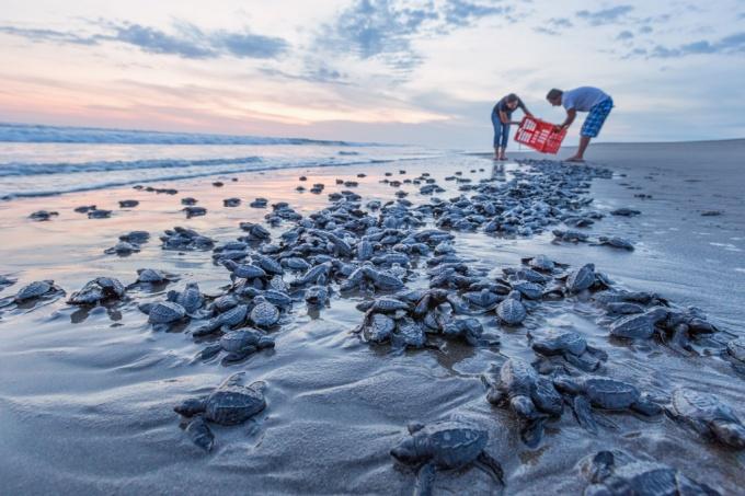 Turtles camp, Puerto Arista, Chiaps, Mexico.