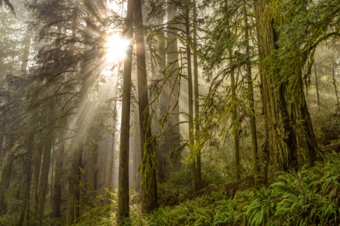 Redwood National Park is the best place in the world to see the tallest trees. We felt lucky to see the sun between them.