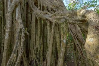 Follow our trip on www.legaillardgalopere-en-amerique-centrale.blogspot.com On Facebook www.facebook.com/gaillard.galopere For prints, visit www.galopere-photo.com